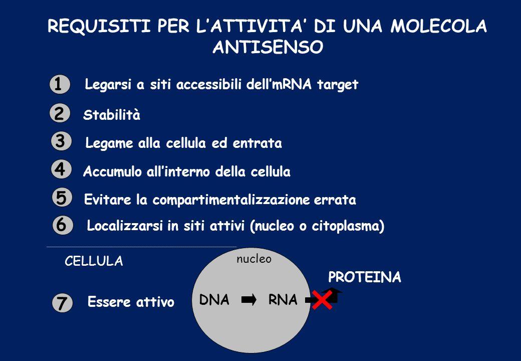 REQUISITI PER LATTIVITA DI UNA MOLECOLA ANTISENSO 7 1 2 3 4 5 6 Legarsi a siti accessibili dellmRNA target Stabilità Legame alla cellula ed entrata Ac