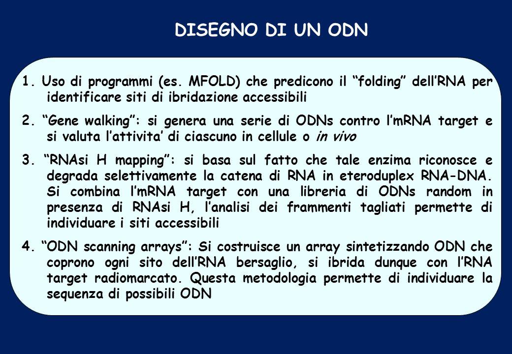 DISEGNO DI UN ODN 1. Uso di programmi (es. MFOLD) che predicono il folding dellRNA per identificare siti di ibridazione accessibili 2. Gene walking: s
