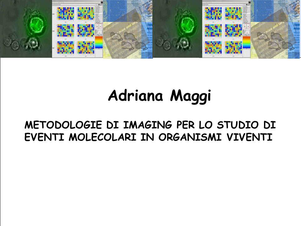 Adriana Maggi METODOLOGIE DI IMAGING PER LO STUDIO DI EVENTI MOLECOLARI IN ORGANISMI VIVENTI