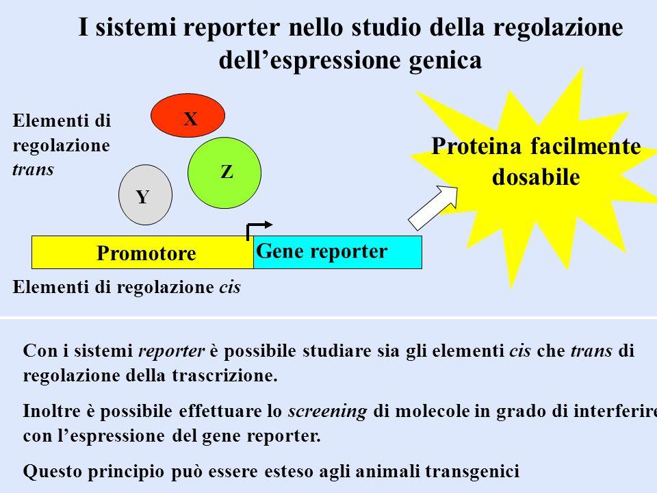 I sistemi reporter nello studio della regolazione dellespressione genica Con i sistemi reporter è possibile studiare sia gli elementi cis che trans di