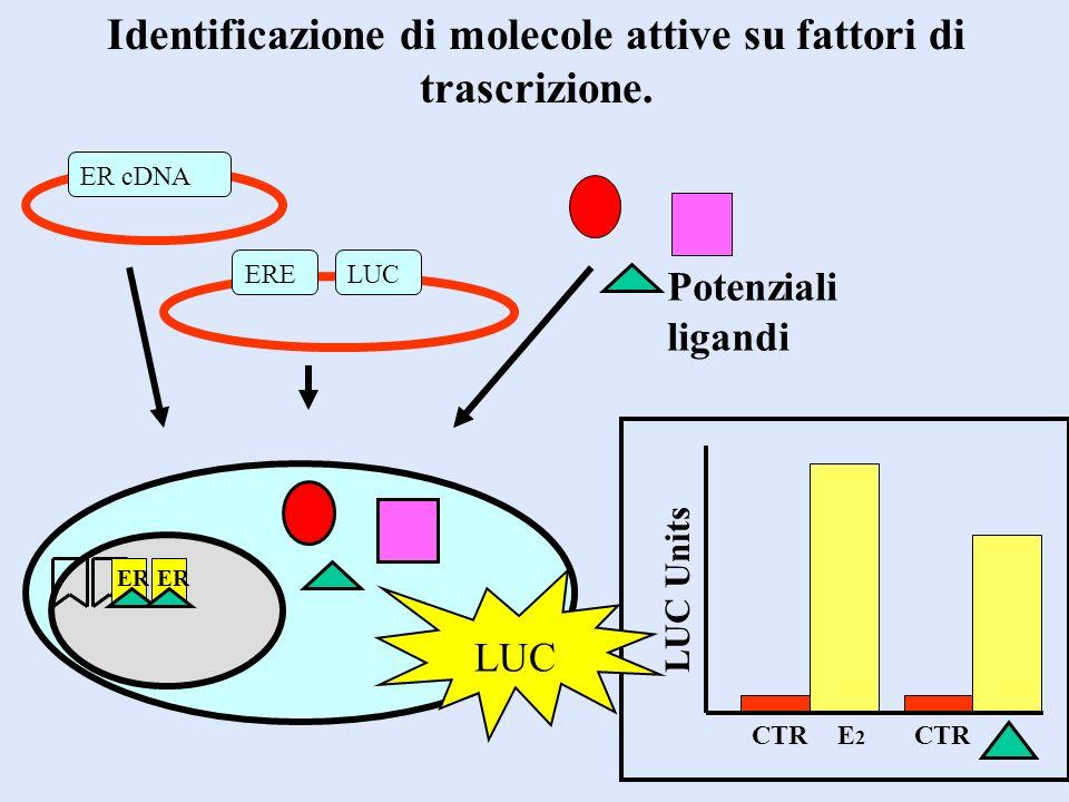 Identificazione di molecole attive su fattori di trascrizione. ER cDNA ERELUC Potenziali ligandi CTR E2E2 LUC Units LUC ER
