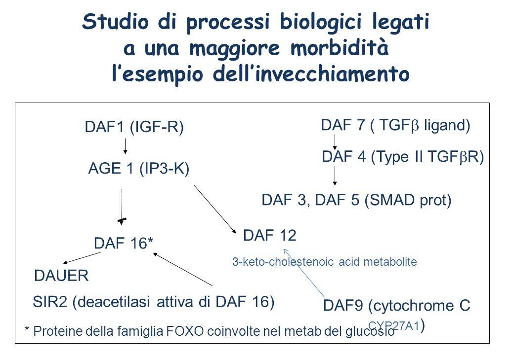 Studio di processi biologici legati a una maggiore morbidità lesempio dellinvecchiamento DAF1 (IGF-R) AGE 1 (IP3-K) DAF 16* DAF 12 DAUER DAF 7 ( TGF l
