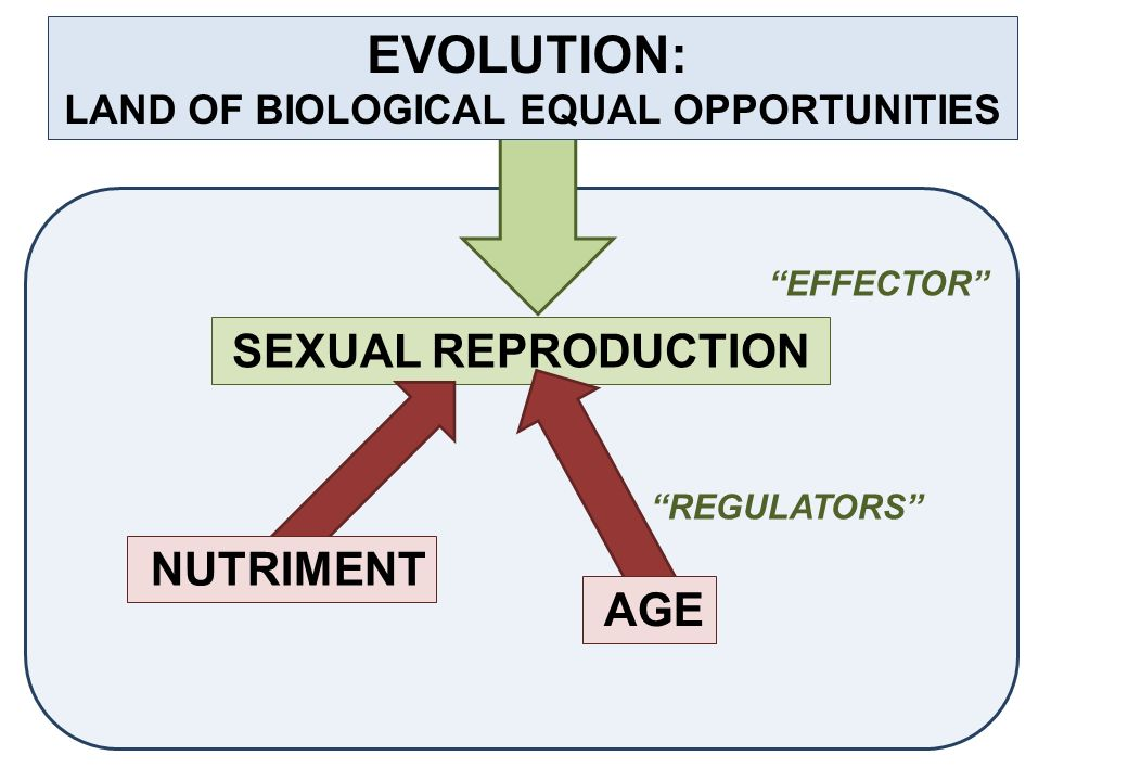 SEXUAL REPRODUCTION REGULATORS NUTRIMENT AGE EFFECTOR EVOLUTION: LAND OF BIOLOGICAL EQUAL OPPORTUNITIES