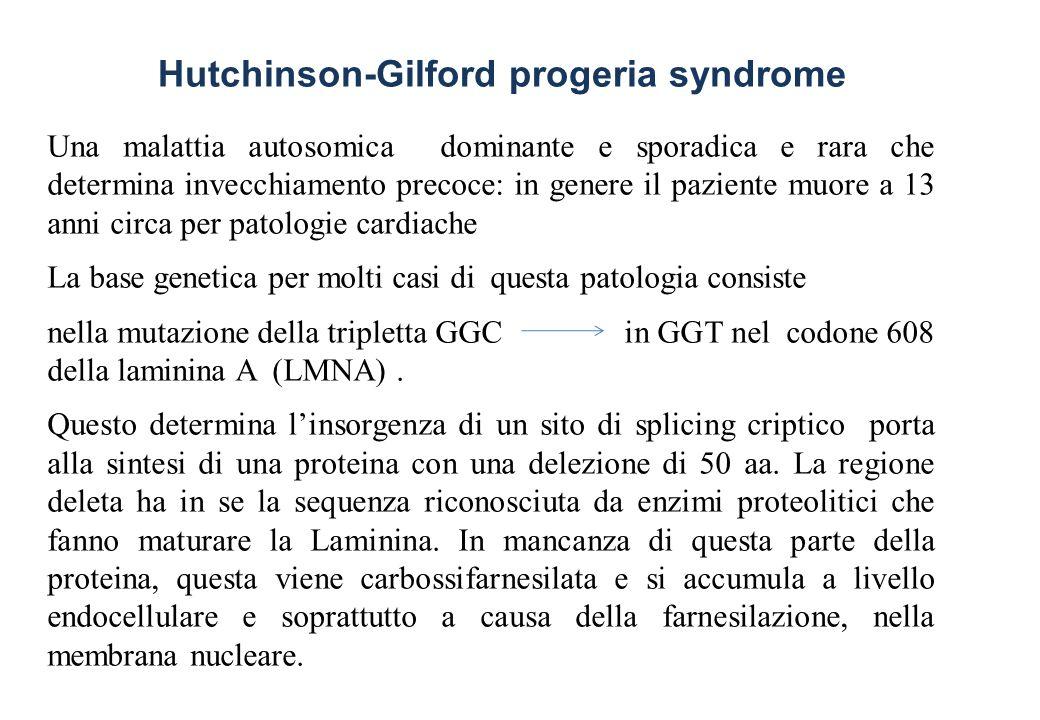 Una malattia autosomica dominante e sporadica e rara che determina invecchiamento precoce: in genere il paziente muore a 13 anni circa per patologie c