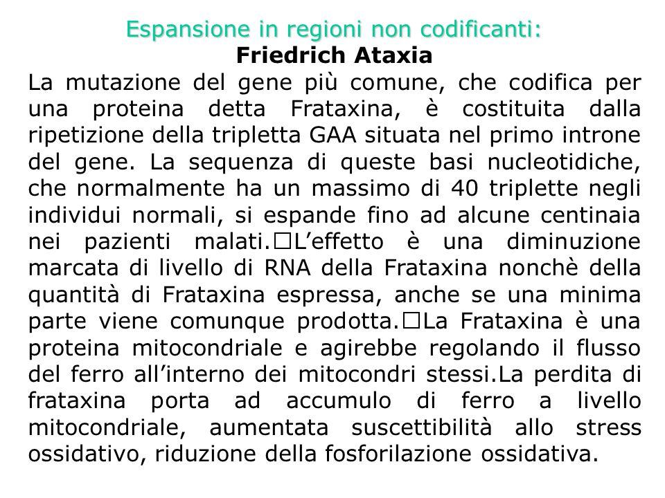 Espansione in regioni non codificanti: Friedrich Ataxia La mutazione del gene più comune, che codifica per una proteina detta Frataxina, è costituita