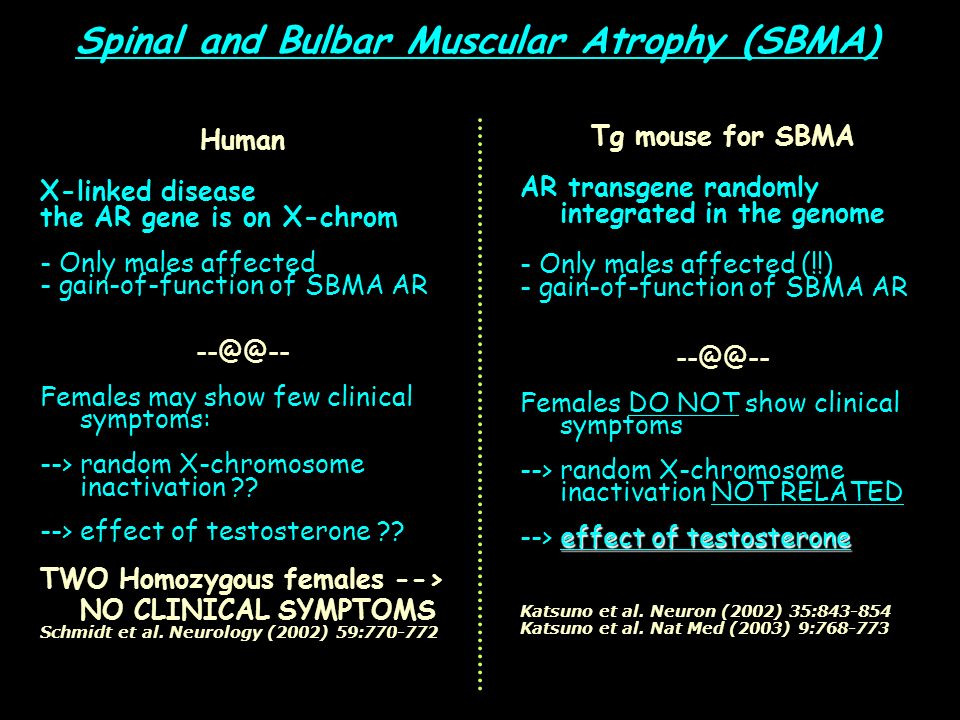 Spinal and Bulbar Muscular Atrophy (SBMA) Human X-linked disease the AR gene is on X-chrom - Only males affected - gain-of-function of SBMA AR --@@--