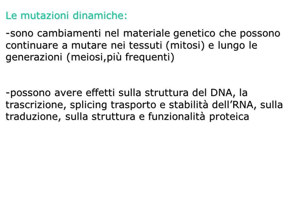 Le mutazioni dinamiche: -sono cambiamenti nel materiale genetico che possono continuare a mutare nei tessuti (mitosi) e lungo le generazioni (meiosi,p