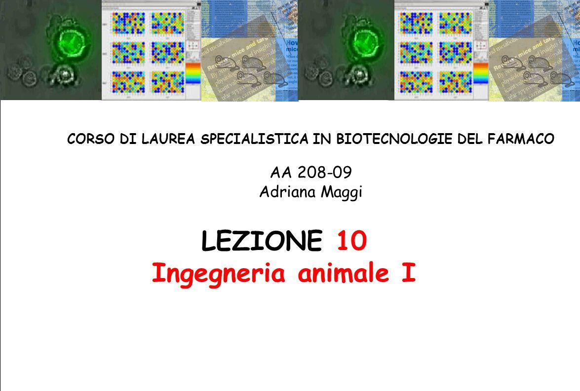 LEZIONE 10 Ingegneria animale I CORSO DI LAUREA SPECIALISTICA IN BIOTECNOLOGIE DEL FARMACO AA 208-09 Adriana Maggi
