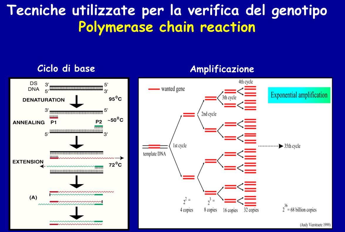 Ciclo di base Amplificazione Tecniche utilizzate per la verifica del genotipo Polymerase chain reaction