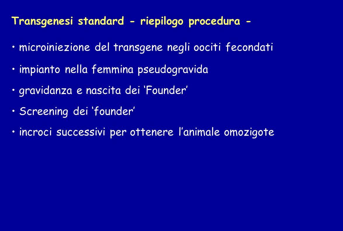 Transgenesi standard - riepilogo procedura - microiniezione del transgene negli oociti fecondati impianto nella femmina pseudogravida gravidanza e nas