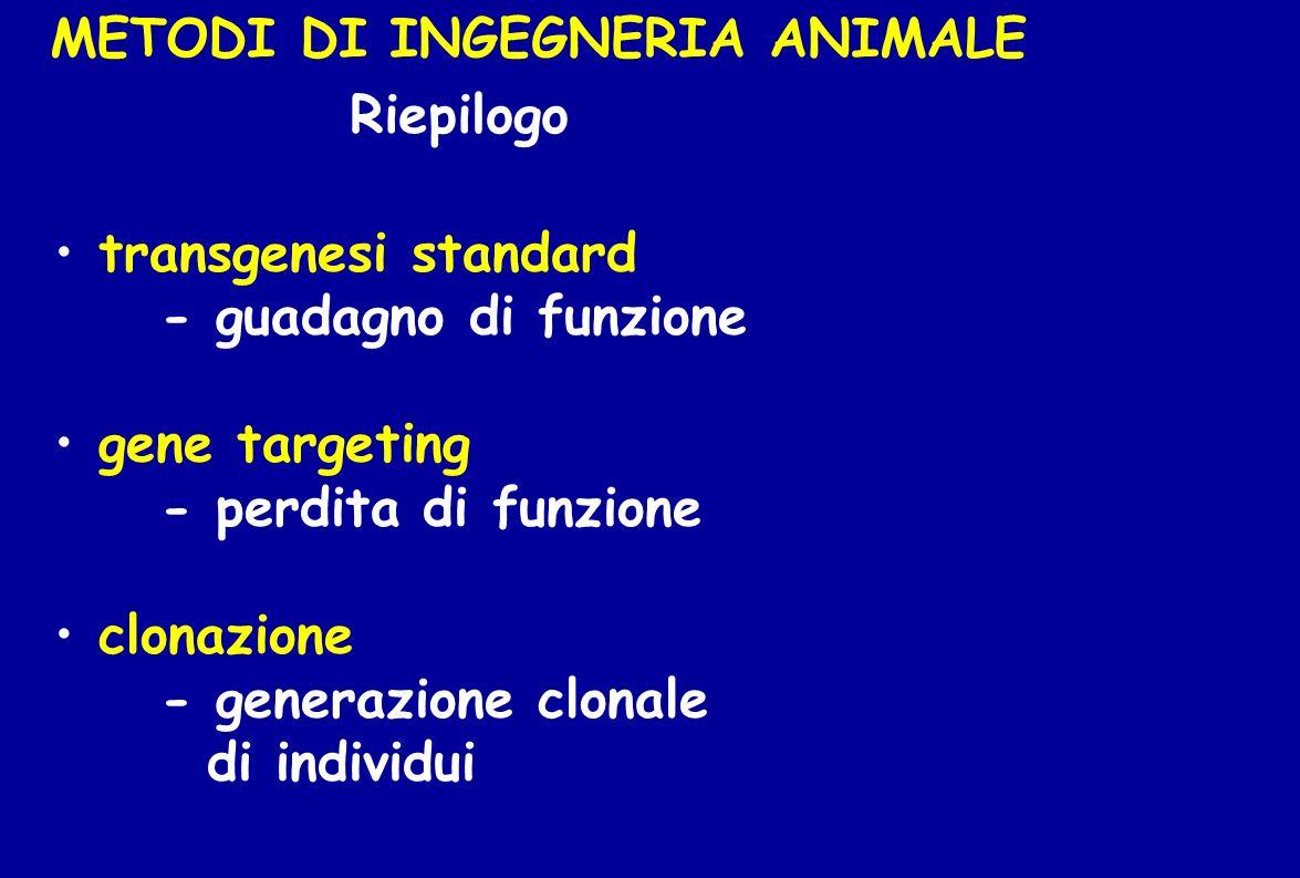 METODI DI INGEGNERIA ANIMALE Riepilogo transgenesi standard - guadagno di funzione gene targeting - perdita di funzione clonazione - generazione clona