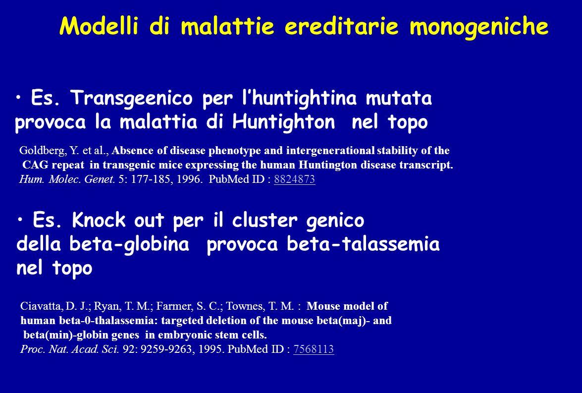 Modelli di malattie ereditarie monogeniche Es. Knock out per il cluster genico della beta-globina provoca beta-talassemia nel topo Ciavatta, D. J.; Ry