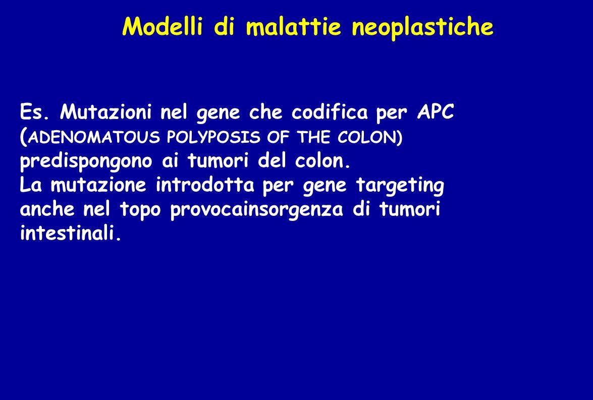 Modelli di malattie neoplastiche Es. Mutazioni nel gene che codifica per APC ( ADENOMATOUS POLYPOSIS OF THE COLON) predispongono ai tumori del colon.