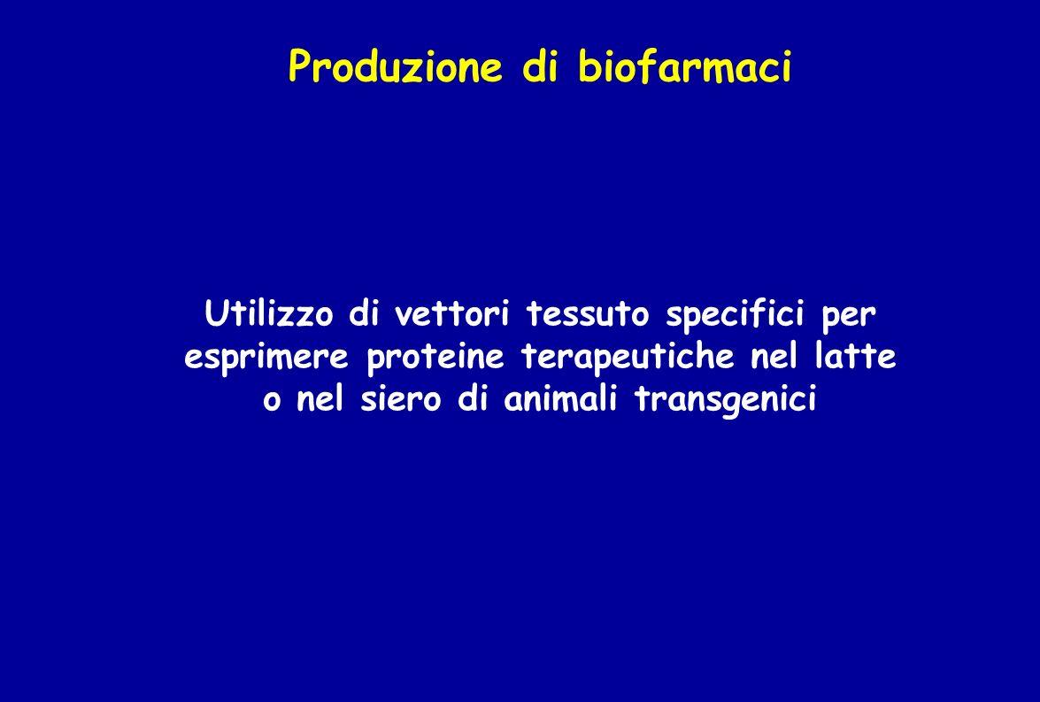 Produzione di biofarmaci Utilizzo di vettori tessuto specifici per esprimere proteine terapeutiche nel latte o nel siero di animali transgenici