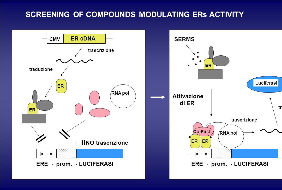 ER cDNA CMV ER trascrizione traduzione SERMS ER Co-Fact. RNA pol Luciferasi trascrizione traduzione ER Attivazione di ER SCREENING OF COMPOUNDS MODULA