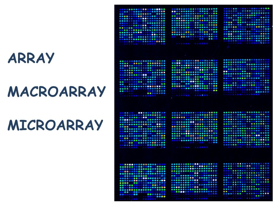 ARRAY MACROARRAY MICROARRAY