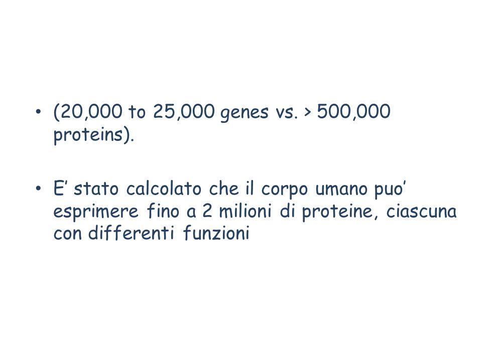 (20,000 to 25,000 genes vs. > 500,000 proteins). E stato calcolato che il corpo umano puo esprimere fino a 2 milioni di proteine, ciascuna con differe