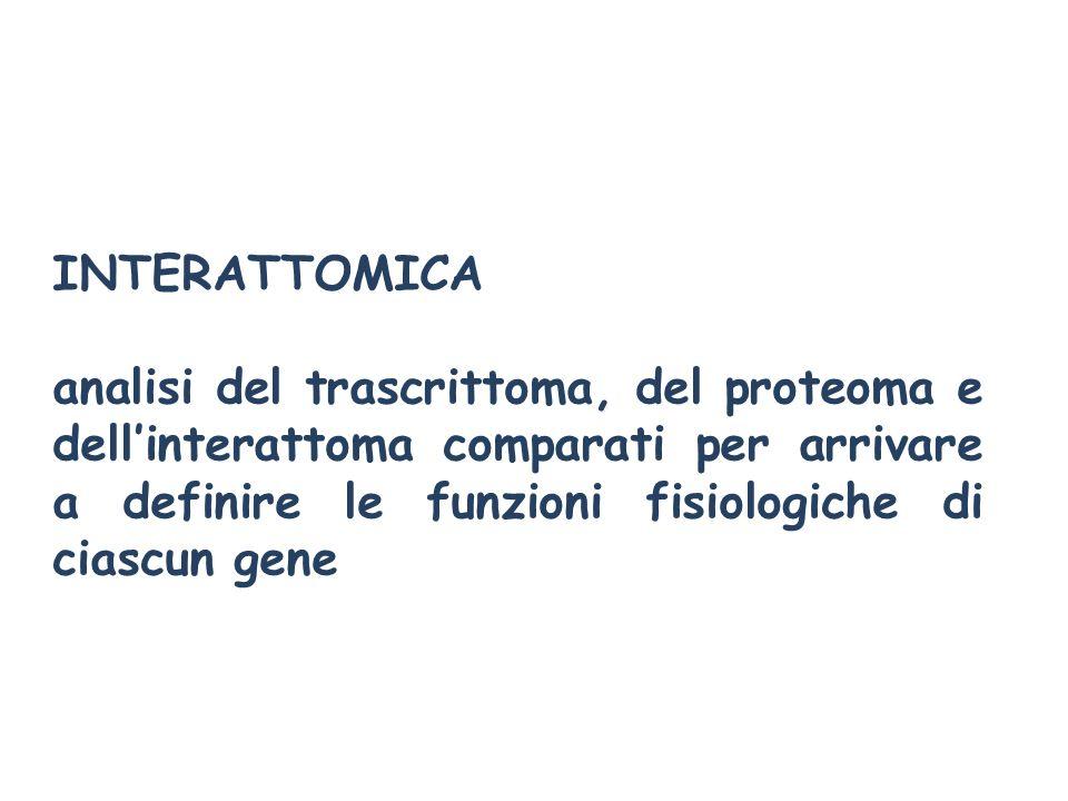 INTERATTOMICA analisi del trascrittoma, del proteoma e dellinterattoma comparati per arrivare a definire le funzioni fisiologiche di ciascun gene