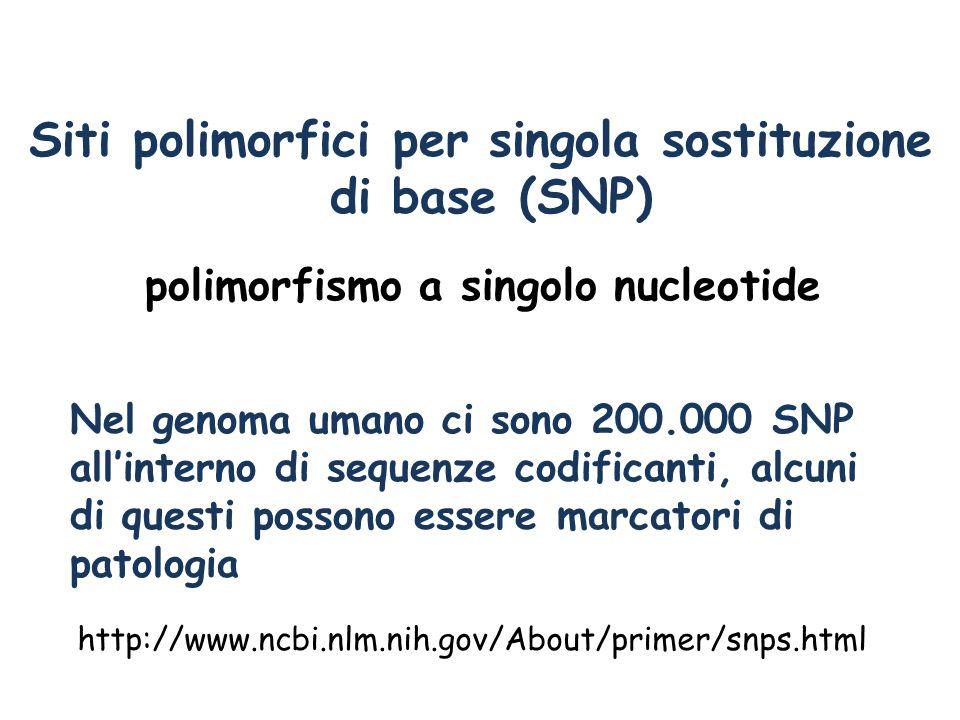 Siti polimorfici per singola sostituzione di base (SNP) di base Nel genoma umano ci sono 200.000 SNP allinterno di sequenze codificanti, alcuni di que