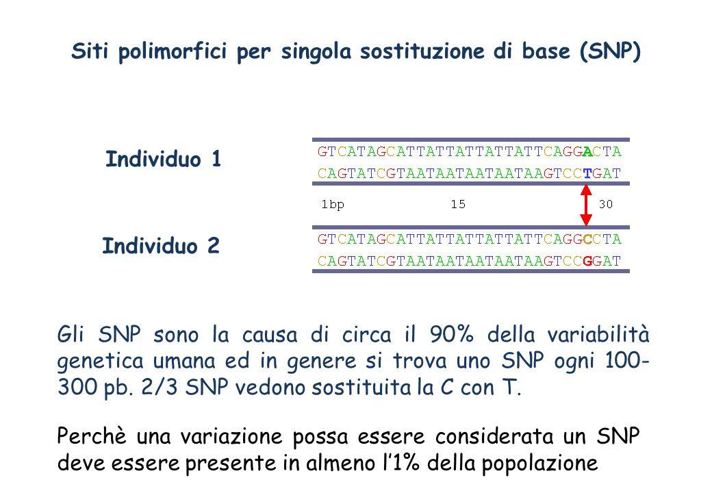 Gli SNP sono la causa di circa il 90% della variabilità genetica umana ed in genere si trova uno SNP ogni 100- 300 pb. 2/3 SNP vedono sostituita la C