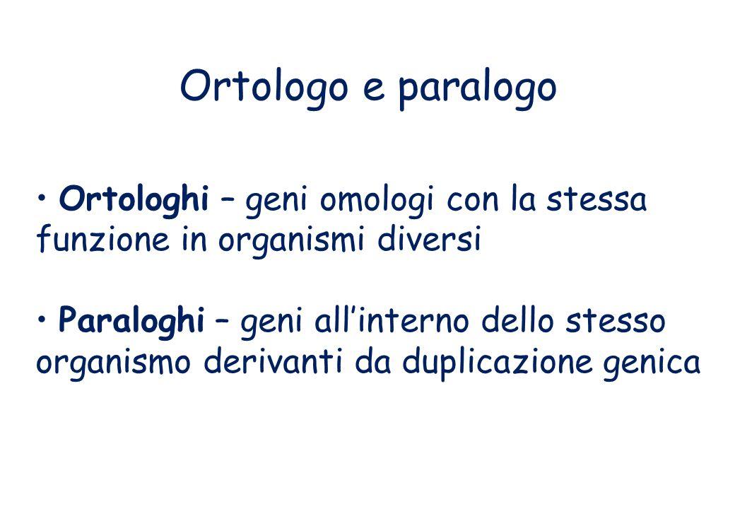 Ortologo e paralogo Ortologhi – geni omologi con la stessa funzione in organismi diversi Paraloghi – geni allinterno dello stesso organismo derivanti