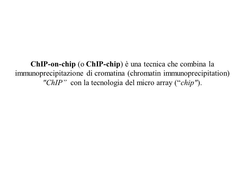 ChIP-on-chip (o ChIP-chip) è una tecnica che combina la immunoprecipitazione di cromatina (chromatin immunoprecipitation)
