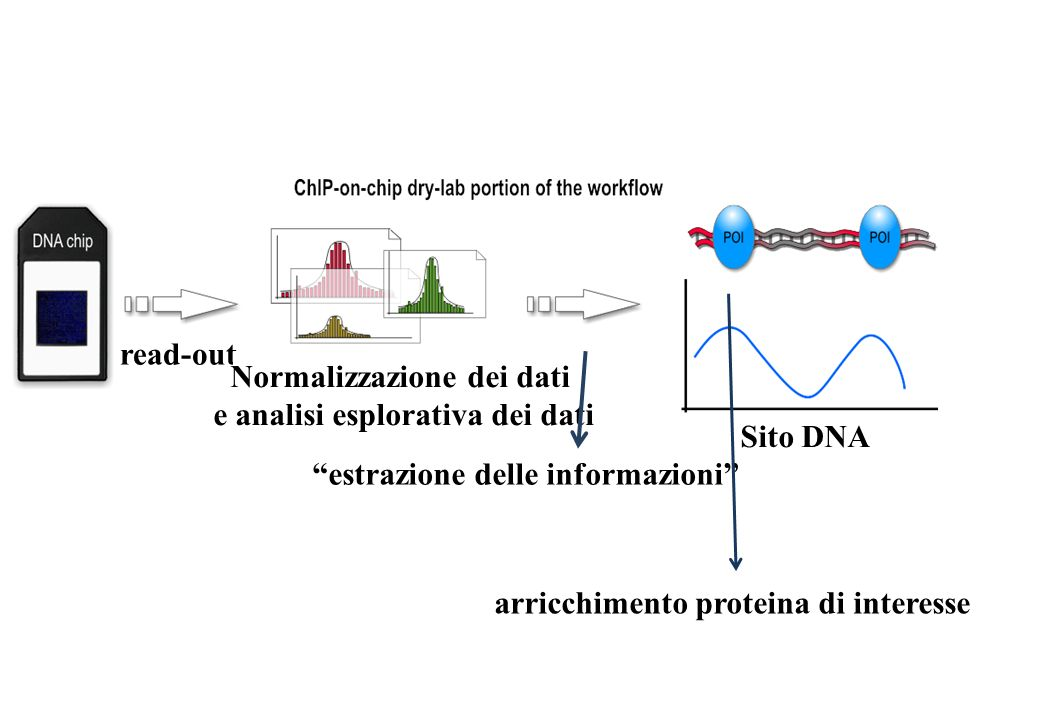 read-out Normalizzazione dei dati e analisi esplorativa dei dati estrazione delle informazioni Sito DNA arricchimento proteina di interesse