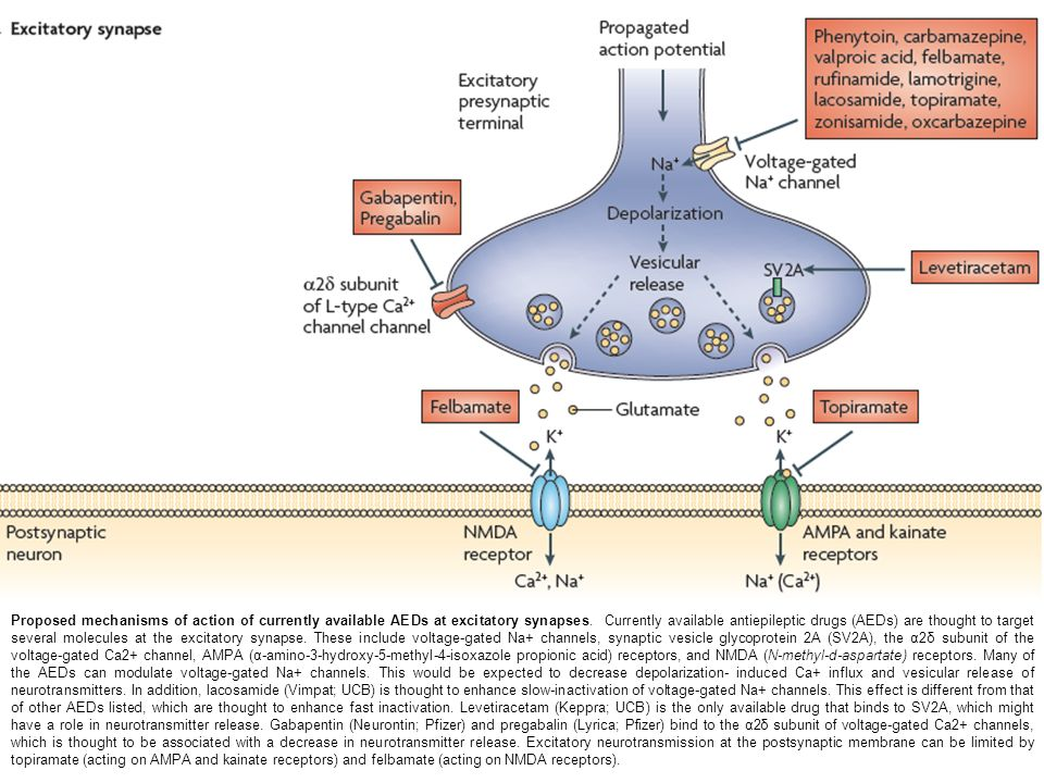 Proposed mechanisms of action of currently available AEDs at excitatory synapses. Currently available antiepileptic drugs (AEDs) are thought to target