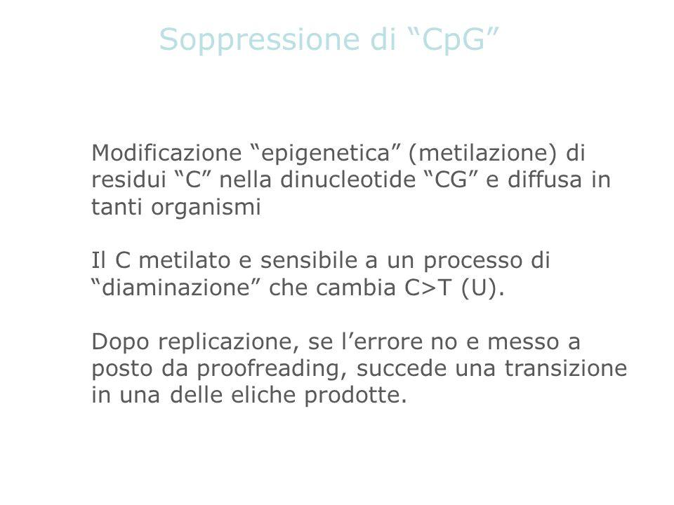 Soppressione di CpG Modificazione epigenetica (metilazione) di residui C nella dinucleotide CG e diffusa in tanti organismi Il C metilato e sensibile