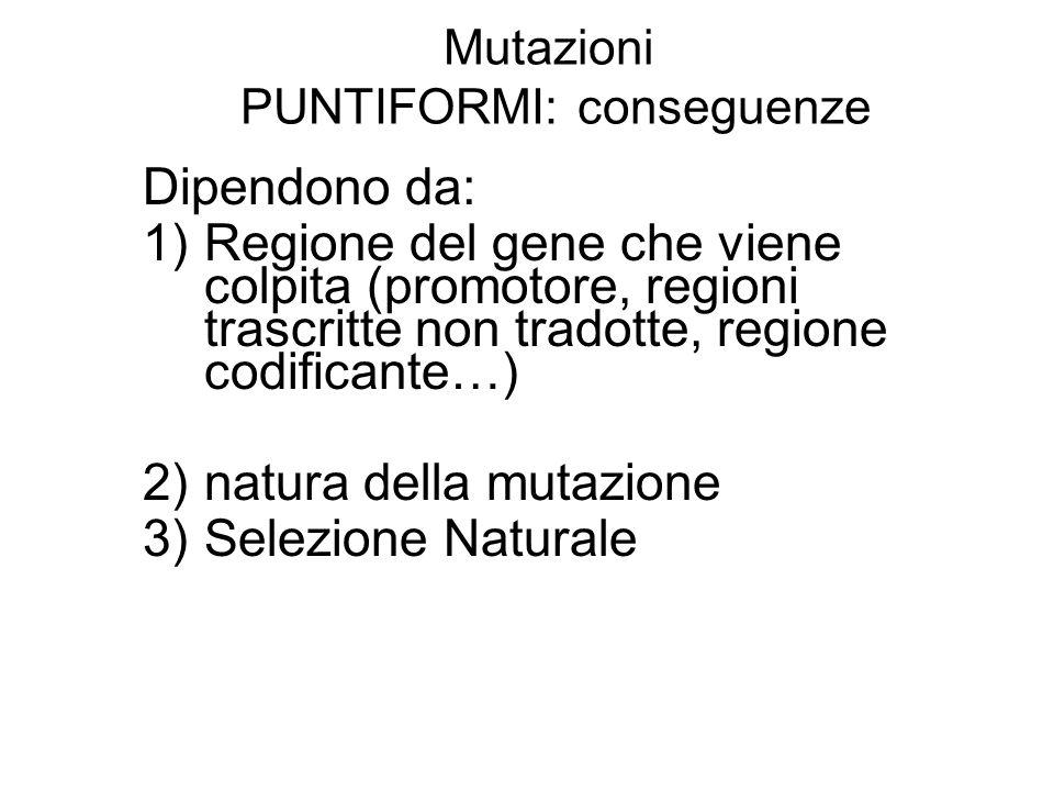 Mutazioni PUNTIFORMI: conseguenze Dipendono da: 1)Regione del gene che viene colpita (promotore, regioni trascritte non tradotte, regione codificante…