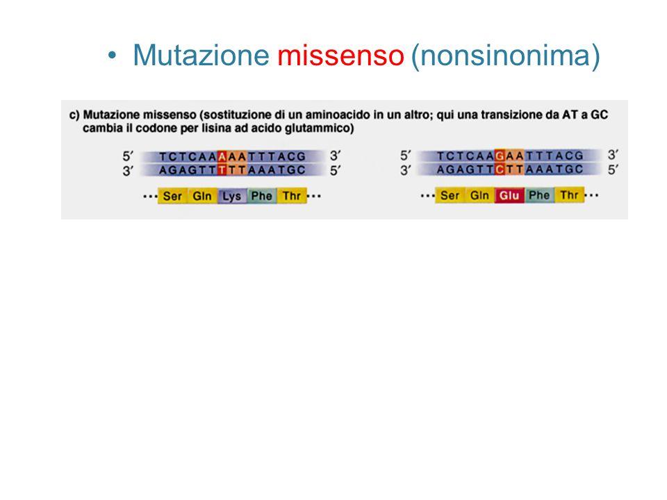 Mutazione missenso (nonsinonima)