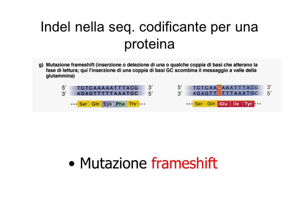 Indel nella seq. codificante per una proteina Mutazione frameshift