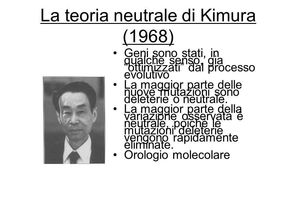 La teoria neutrale di Kimura (1968) Geni sono stati, in qualche senso, gia ottimizzati dal processo evolutivo La maggior parte delle nuove mutazioni s