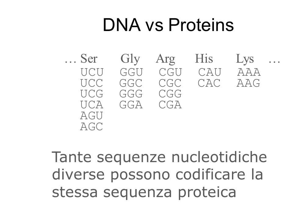 DNA vs Proteins … Ser Gly Arg His Lys … UCU GGU CGU CAU AAA UCC GGC CGC CAC AAG UCG GGG CGG UCA GGA CGA AGU AGC Tante sequenze nucleotidiche diverse p