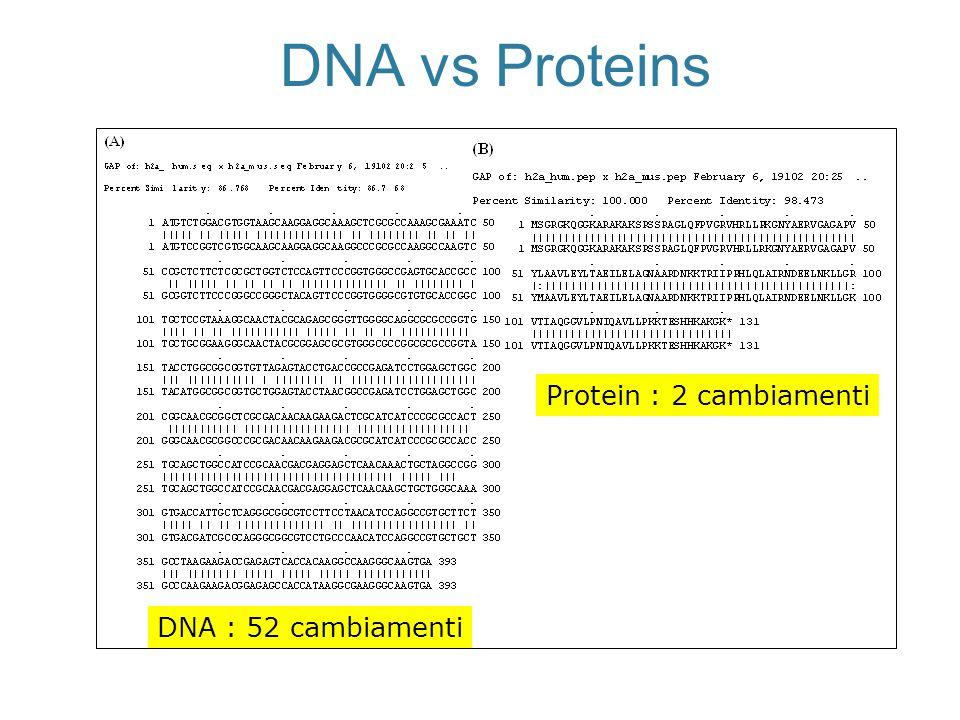 DNA vs Proteins DNA : 52 cambiamenti Protein : 2 cambiamenti