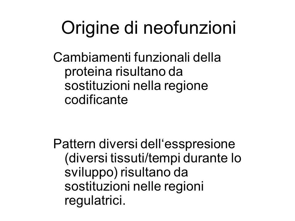 Origine di neofunzioni Cambiamenti funzionali della proteina risultano da sostituzioni nella regione codificante Pattern diversi dellesspresione (dive