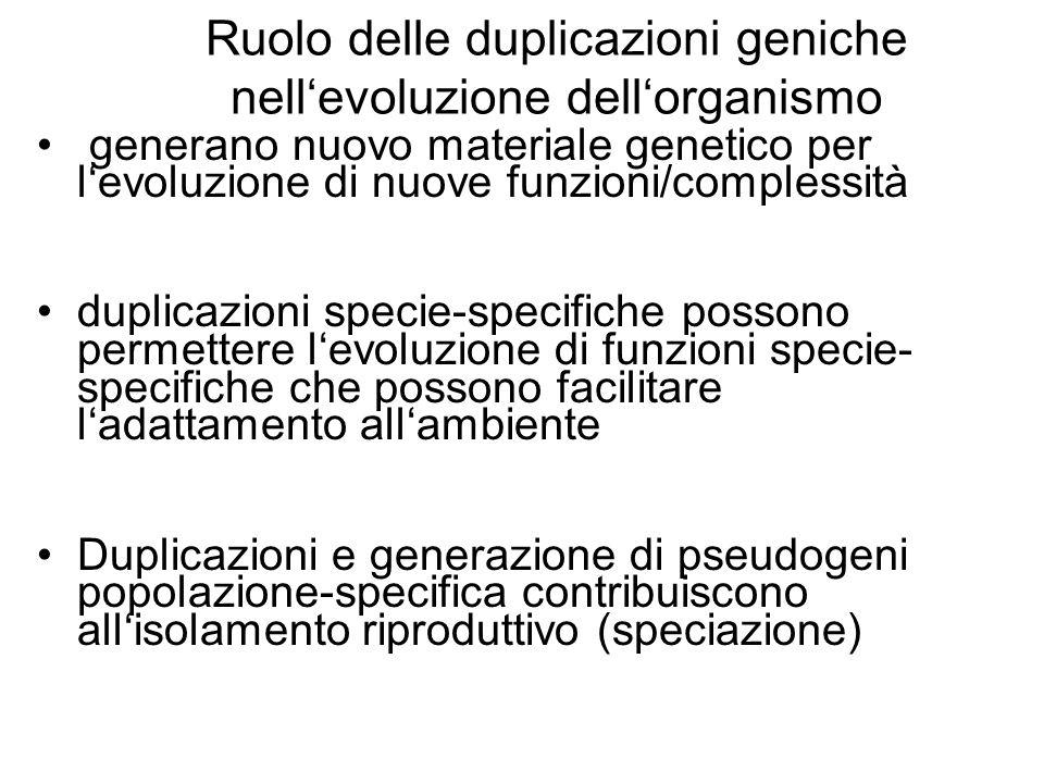 Ruolo delle duplicazioni geniche nellevoluzione dellorganismo generano nuovo materiale genetico per levoluzione di nuove funzioni/complessità duplicaz