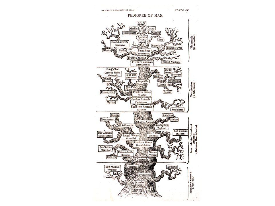 Phylogenetic systematics Omologia: si riferisce allevidenza di un progenitore comune (common descent) Usa alberi per indicare relazione Gruppi monofiletici (clades) - contengono organismi (o sequenze ) che sono più strettamente imparentate fra di loro di quanto siano imparentate con altre organismi (o sequenze) al di fuori del gruppo.
