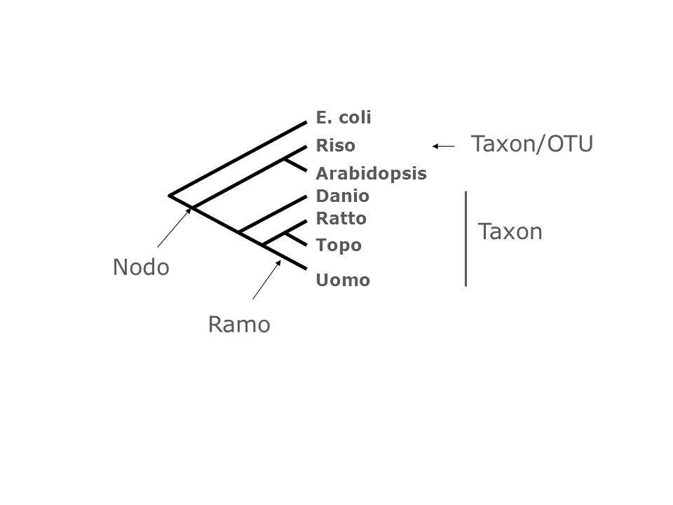 E. coli Arabidopsis Riso Danio Uomo Topo Ratto Ramo Nodo Taxon/OTU Taxon
