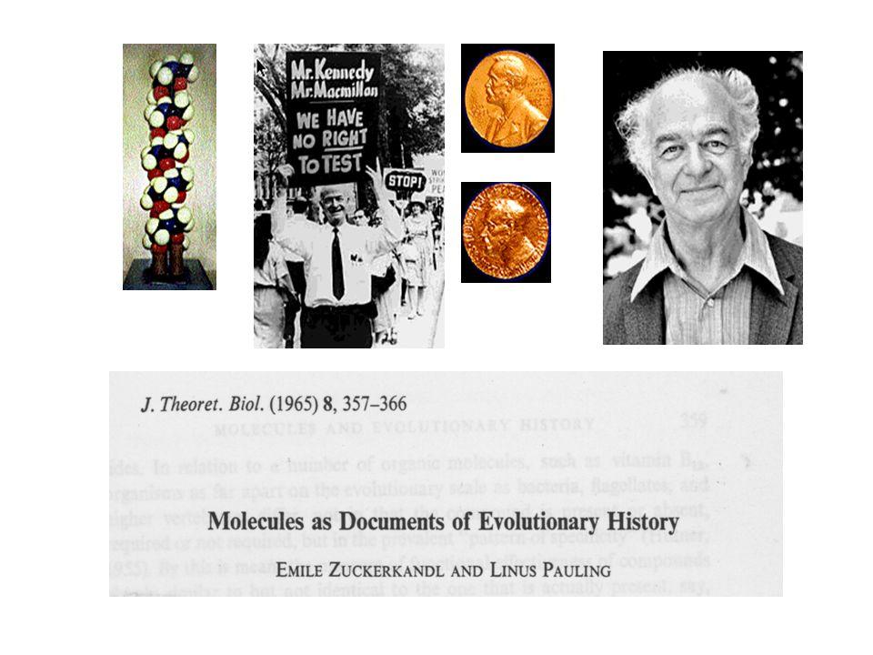 Terminologia I Node/nodo: un punto di ramificazione su un albero filogenetico