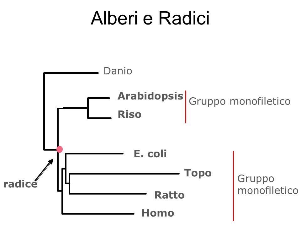 Danio radice E. coli Topo Ratto Homo Arabidopsis Riso Gruppo monofiletico Alberi e Radici