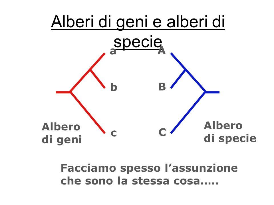 Alberi di geni e alberi di specie Facciamo spesso lassunzione che sono la stessa cosa….. a b c A B C Albero di geni Albero di specie