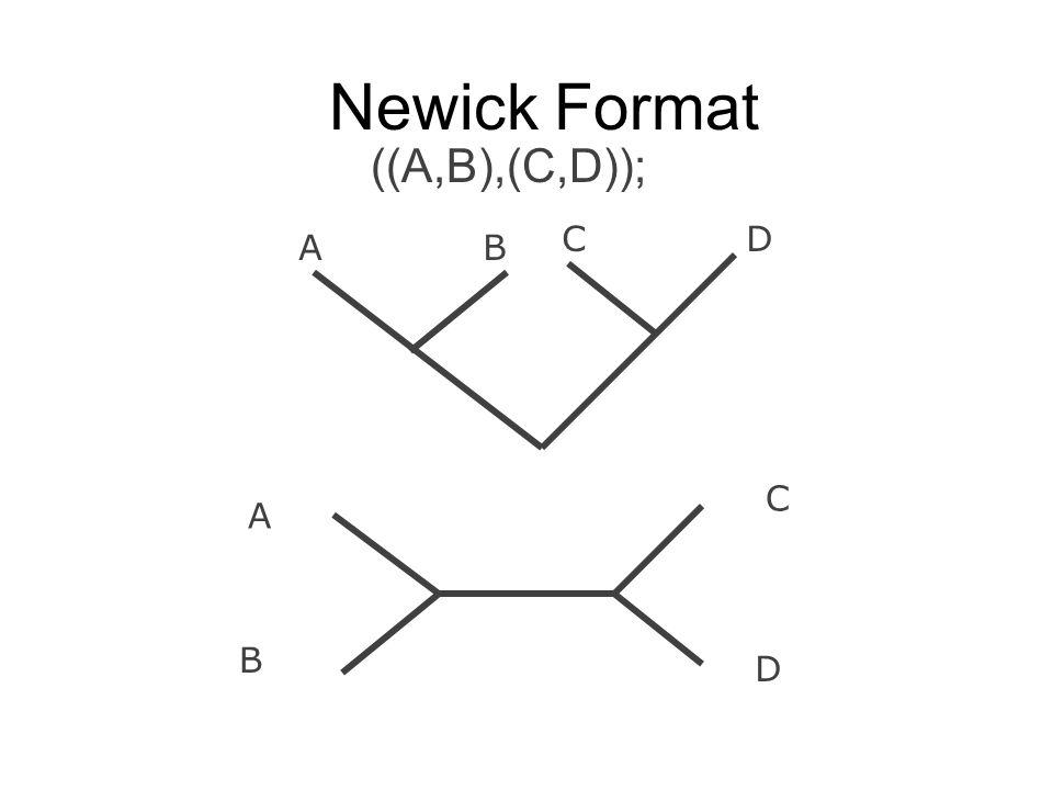 Newick Format ((A,B),(C,D)); A B C D AB CD