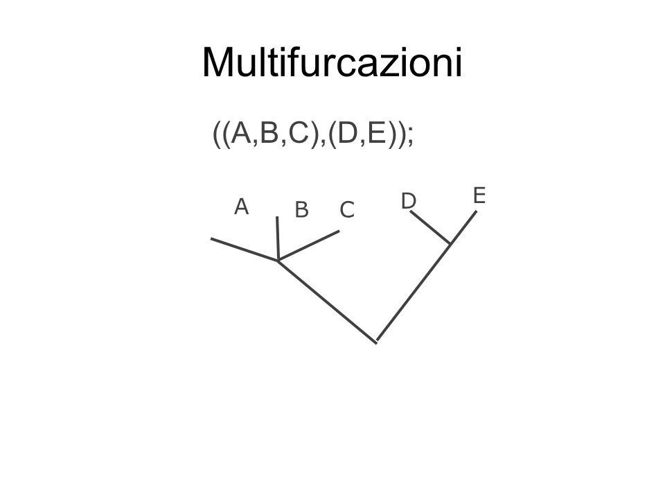 Multifurcazioni ((A,B,C),(D,E)); D C A B E