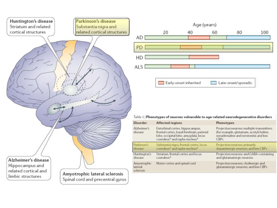 DOPAMINA: precursore di noradrenalina e adrenalina.