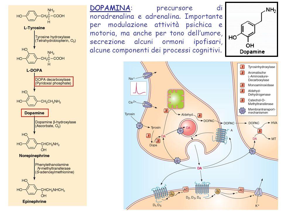Park2= PARKIN Park2= PARKIN gene = E3 ubiquitin ligases addition of ubiquitin chains to target misfolded proteins Catalyzes the addition of ubiquitin chains to target misfolded proteins before their degradation by the proteasome.