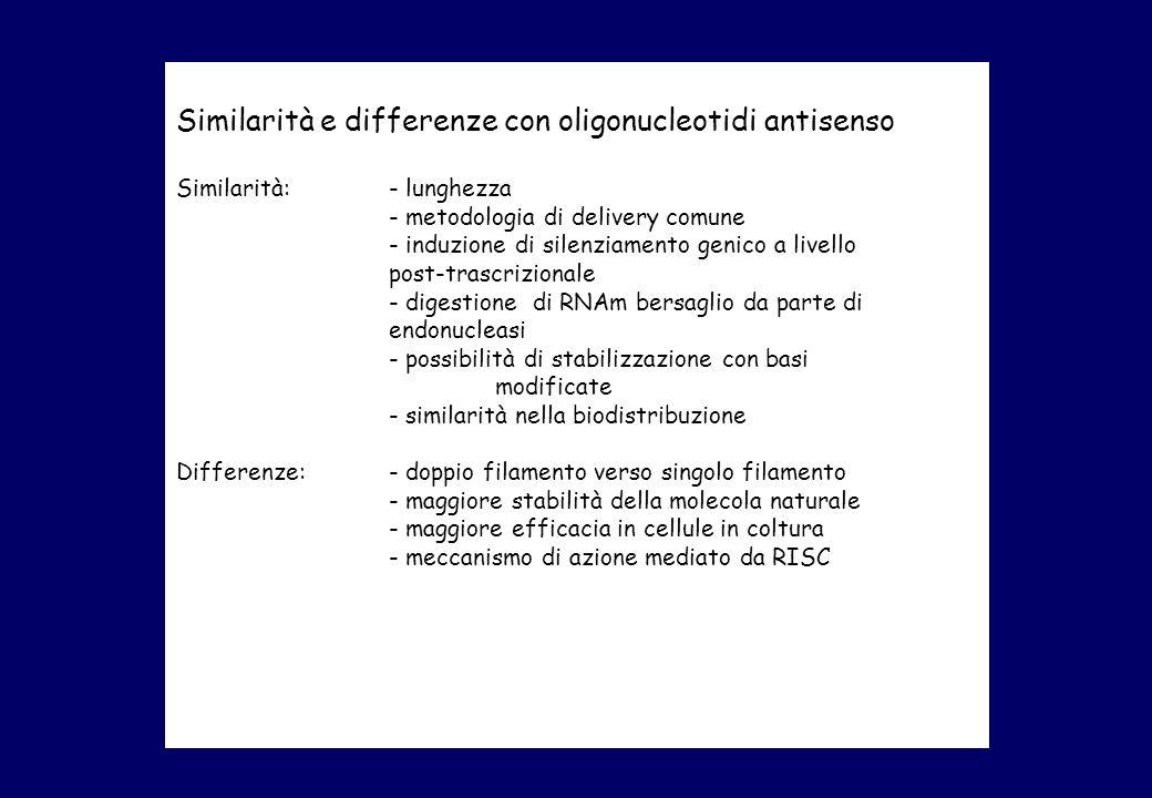 Similarità e differenze con oligonucleotidi antisenso Similarità: - lunghezza - metodologia di delivery comune - induzione di silenziamento genico a livello post-trascrizionale - digestione di RNAm bersaglio da parte di endonucleasi - possibilità di stabilizzazione con basi modificate - similarità nella biodistribuzione Differenze:- doppio filamento verso singolo filamento - maggiore stabilità della molecola naturale - maggiore efficacia in cellule in coltura - meccanismo di azione mediato da RISC