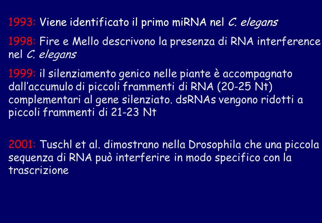 1993: Viene identificato il primo miRNA nel C. elegans 1998: Fire e Mello descrivono la presenza di RNA interference nel C. elegans 1999: il silenziam