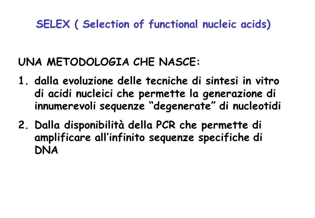 SELEX ( Selection of functional nucleic acids) UNA METODOLOGIA CHE NASCE: 1.dalla evoluzione delle tecniche di sintesi in vitro di acidi nucleici che
