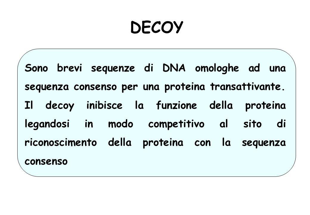 DECOY Sono brevi sequenze di DNA omologhe ad una sequenza consenso per una proteina transattivante. Il decoy inibisce la funzione della proteina legan